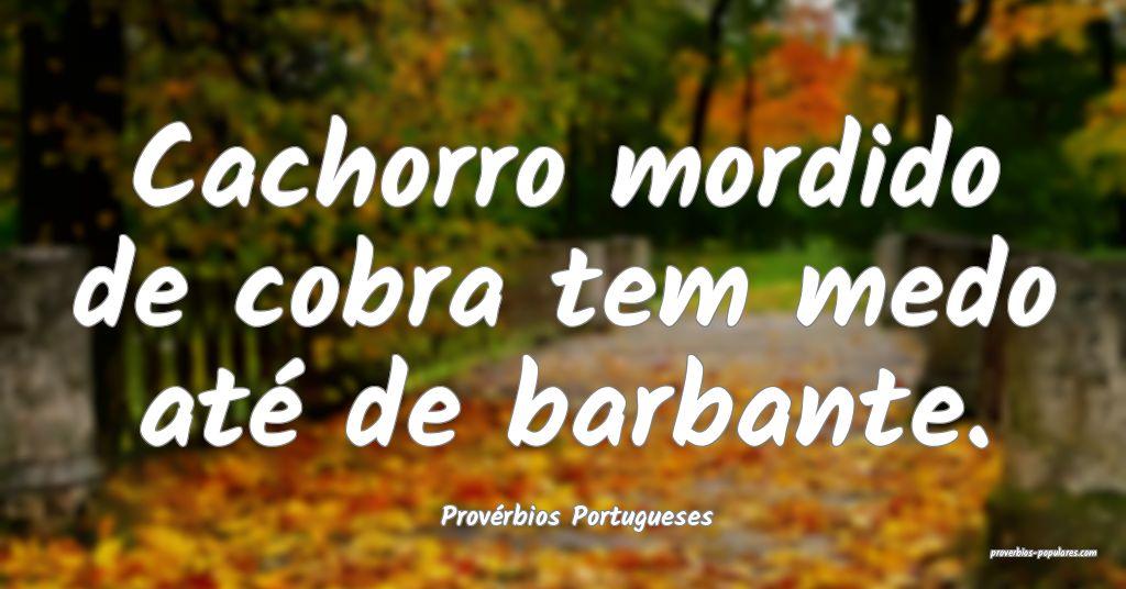 Provérbios Portugueses - Cachorro mordido de cobr ...