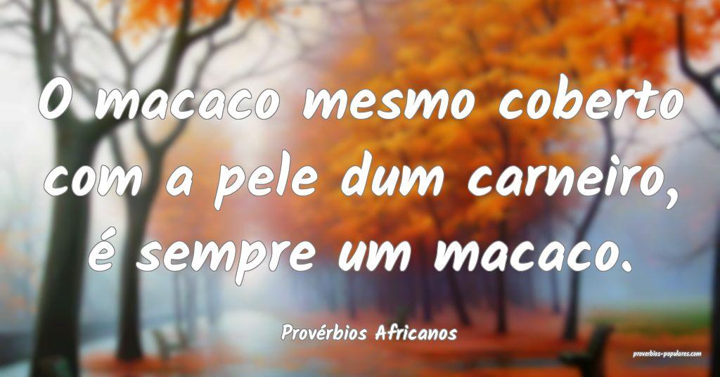 Provérbios Africanos - O macaco mesmo coberto com ...