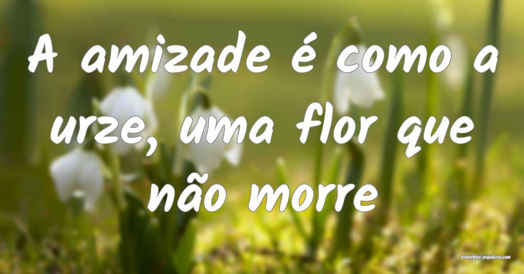 A amizade é como a urze, uma flor que não morre ...
