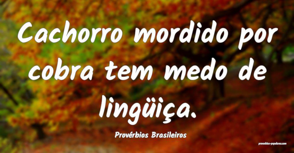 Provérbios Brasileiros - Cachorro mordido por cob ...