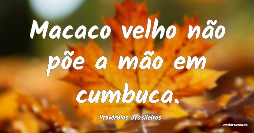 Provérbios Brasileiros - Macaco velho não põe a ...